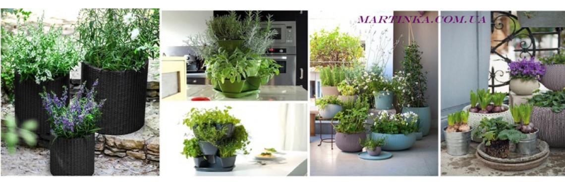 Домашняя оранжерея - тренд этой весны!